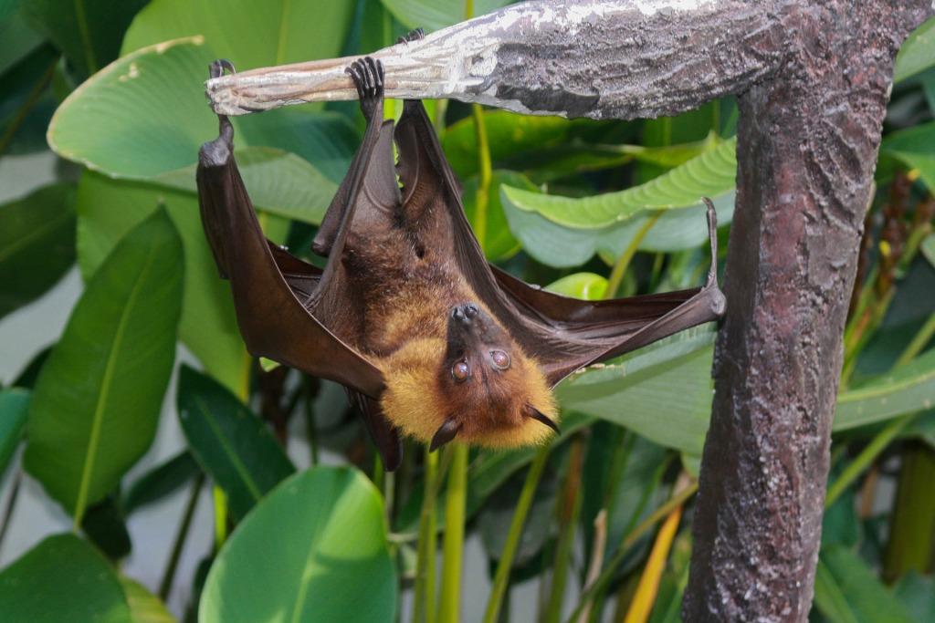 bat-1255957_1920