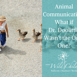 Animal Communication: What if Dr. Doolittle Wasn't the Only One?